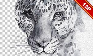 老虎长颈鹿等黑白手绘创意免抠素材