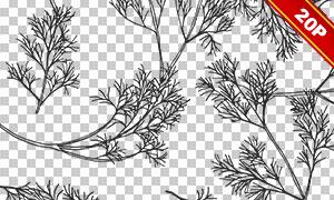 黑白手绘植物叶子无缝图案免抠素材