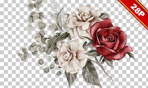 花卉植物与边框等水彩免抠图片素材
