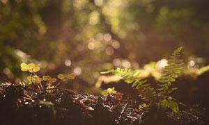 光斑下的三叶草和藤野摄影图片