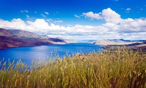 藍色湖泊邊的水草攝影圖片