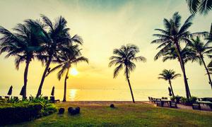 夕陽下的海邊椰子樹攝影圖片