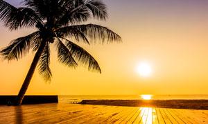 夕陽下海邊的椰子樹攝影圖片