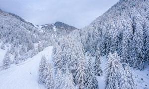 冬季大雪后的山林美景攝影圖片