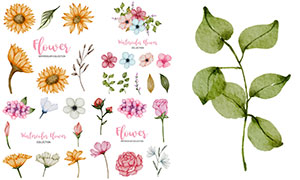 玫瑰花等水彩創意花卉主題矢量素材