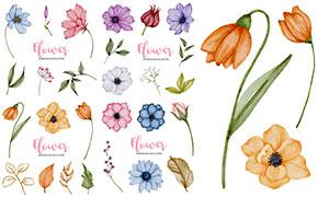 植物花朵與藤蔓等水彩創意矢量素材