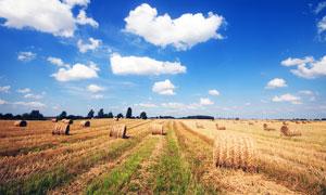 蓝天下农田中的草堆摄影图片