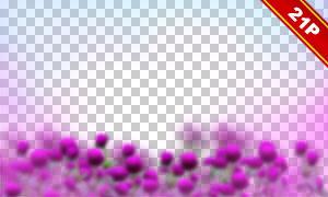 花卉植物前景裝飾疊加圖片素材集V01