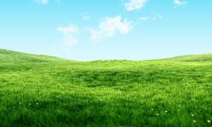 蓝天白云下的草地和野花摄影图片