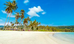 沙灘上的椰子樹景觀攝影圖片