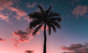 傍晚海邊的椰樹剪影高清攝影圖片
