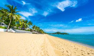 藍天白云下的沙灘和椰樹林攝影圖片