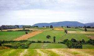 田園中的農田風光美景攝影圖片