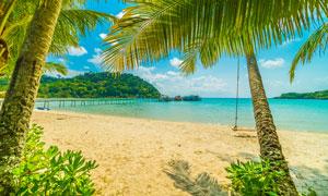 海邊沙灘上的木橋和椰樹攝影圖片