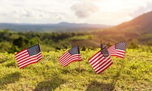 草地上插着的美国国旗摄影图片