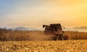 傍晚正在农收的收割机摄影图片