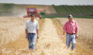 在农田中考察的农民摄影图片