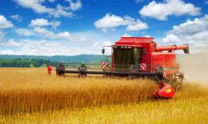 农场中收割麦子的收割机摄影图片