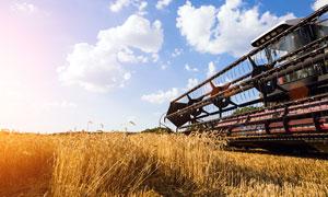 农场中的收割机特写摄影图片