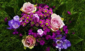 草地上的缤纷多彩鲜花摄影高清图片