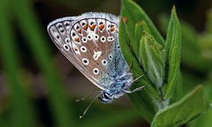 绿叶植物上的蝴蝶特写主题摄影图片