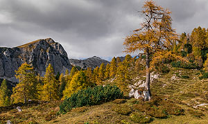 秋天季节山坡上的树木摄影高清图片