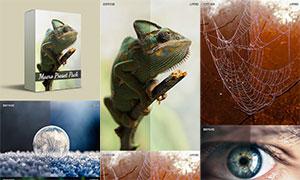 数码照片增加色彩饱和度效果LR素材