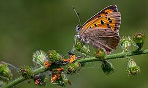 植物藤蔓上的一只蝴蝶摄影高清图片