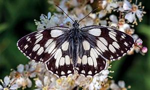 鲜花与展翅高飞的蝴蝶摄影高清图片