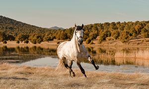 在荒草地上撒欢儿的马摄影高清图片
