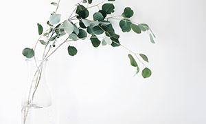 玻璃瓶里的尤加利树叶摄影高清图片