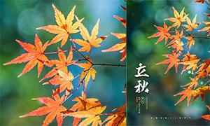 楓葉主題立秋節氣宣傳單設計PSD素材