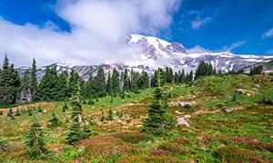 雪山下的树木与花草等摄影高清图片