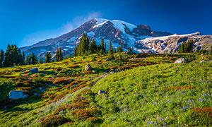 雪山与山坡上花草树木摄影高清图片