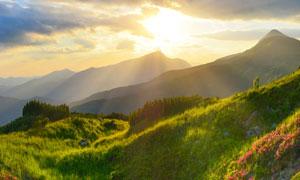 早晨阳光下的山坡花草美景色摄影促使我写这本书图片