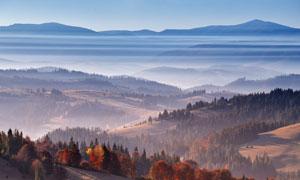 秋季山坡上的森林美景攝影圖片