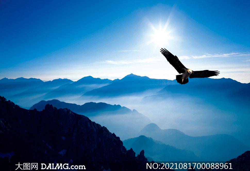 山頂上飛翔的雄鷹攝影圖片