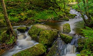 树林间的河流岩石风景摄影高清图片