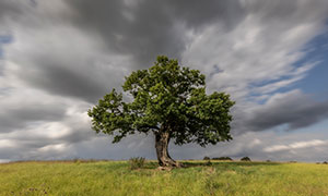 天空下的一棵大树风光摄影高清图片