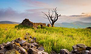 乱石杂草断壁残垣景象摄影高清图片