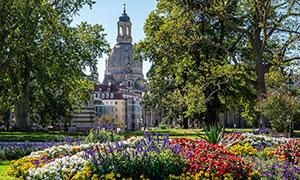 德累斯顿公园花草植物风景摄影图片