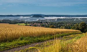 农田庄稼地与远山树林摄影高清图片