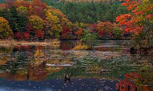 秋意渐浓湖畔树木风景摄影高清图片