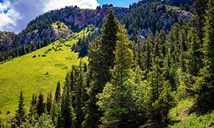 山坡上的茂密树林风光摄影高清图片