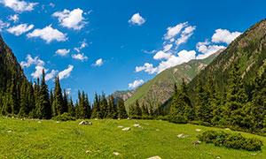 朵朵白云下的高山树林草地高清图片