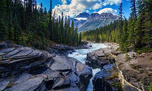 高山树林溪流自然风光摄影高清图片