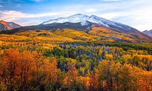 秋高气爽雪山树木风光摄影高清图片