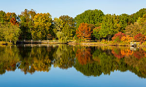 秋天湖边繁茂枝叶树木摄影高清图片