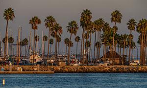 海滨城市椰树船只风光摄影高清图片