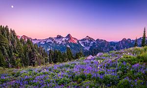一轮明月下的群山树木花草摄影图片